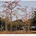 190301-中正公園