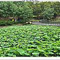 200426-蓮花公園
