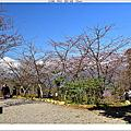 210110-寶山二集團櫻花公園