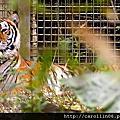 20120302木柵動物園