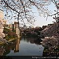 2012四月 東京千鳥之淵