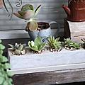 【陽台上的風景】多肉植物水泥盆栽