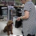 VIP寵物劉吉米來訪,Daycare一天