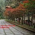 20121104-巴博庫魯山 (馬望來山)