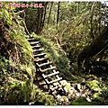 20130317-福巴越嶺古道(巴陵段)-檜山