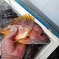 一支釣樂趣無窮+一支釣海鮮麵<船長名言.掛底個幾百次.就學會一支釣了>