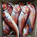釣魚筆記4.1..深海釣赤鯮大目馬頭魚進階篇2上鉛探討