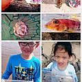 外木山釣魚+聖托里尼海景餐廳+玩沙抓蟹撿笨魚+萬里吃龍蝦花蟹