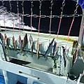 釣魚筆記6.3基隆嶼內的近岸大白帶應對
