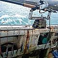 大白帶是職業漁人的必修課