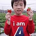 1030209三本草莓園