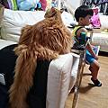 貓貓, 咩奬與雙毛的15年9月小記錄