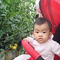 20121103金勇果園採番茄