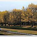 國立昭和記念公園