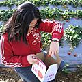 20060202_卓蘭採草莓