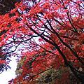 2005秋-JAPAN 東京
