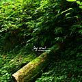 溪 × 竹