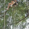 橋頭攀樹體驗101.7.15