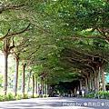 【屏東。潮州鎮】綿延長達1.2公里的正宗綠色隧道『泗林綠色隧道(泗林健身步道)』,總是吸引著旅人探尋被綠樹擁抱的幸福氛圍。