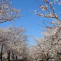 4/5 - 4/9 京都大阪行