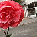 My Garden ♣