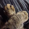 貓貓真可愛