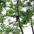 四川。夏。熊貓