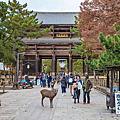 【奈良楓景】奈良公園
