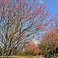 2014春暖花開
