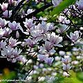 2015春暖花開