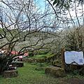 2013烏松崙梅園