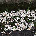 2012.04.21桃園龍潭-小粗坑步道