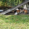 2008/12/28 桃園龜山春天農場