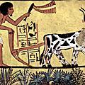 乳酪的起源