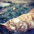 花蓮  貓也慢活