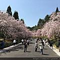 櫻花<6>