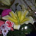 2011迎新春