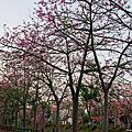 北斗河濱公園