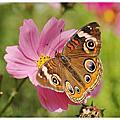 蝴蝶真美麗