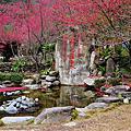 20100126、27_廬山、彩蝶瀑布、鯉魚潭
