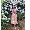 20200609竹子湖繡球花