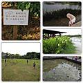 2011-07-10 八德埤塘生態公園
