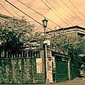 2013/01/21 這一天,我背著樂寶與平等里的櫻花巷約會