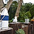 102.11.10新竹鳥花園