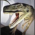 2012-地球最古老的恐龍展