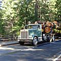 8K07_CA_Yosemite II