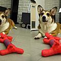 Billipets玩具試玩
