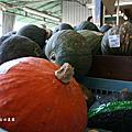 2011_09日本長野-蓼科Tatesina自由農園