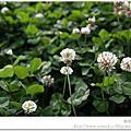 台北花博好好玩2011/04/08