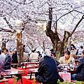 桜の花見in Japan-京阪神